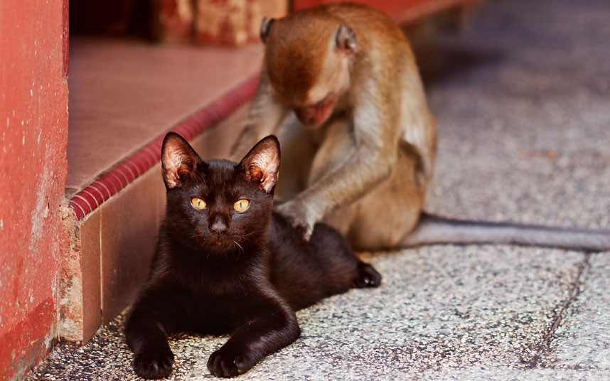 potd-massage-cat_2200594k
